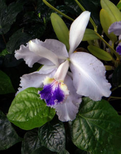 Go Go Go . . . Orchid