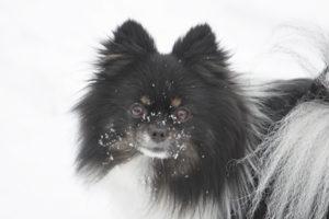 Snowy smile
