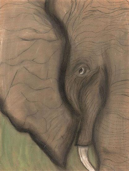 Elephant Eyes Tell a Million Stories