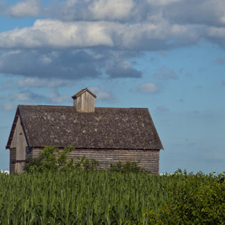 Minnesota - Barn in Summer